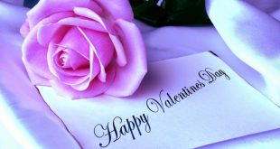 Pink Rose Flower Desktop Wallpapers 2020 Valentine Day